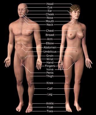 59142human anatomy labeled d486860b1918 Mature Women Lingerie Models * Rubee Tuesday * Older Women ...
